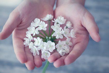 flower-1283259_960_720