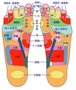 アトピーに効果のある足ツボ 反射区