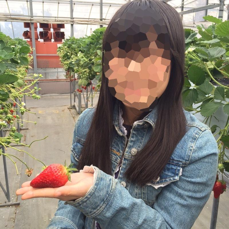 愛知県 いちご狩り タニカワ農園