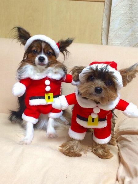 可愛い 犬服 サンタ クリスマス