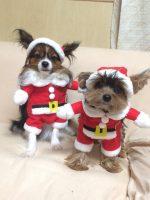 可愛すぎる♪ サンタになれる犬服 クリスマスに!