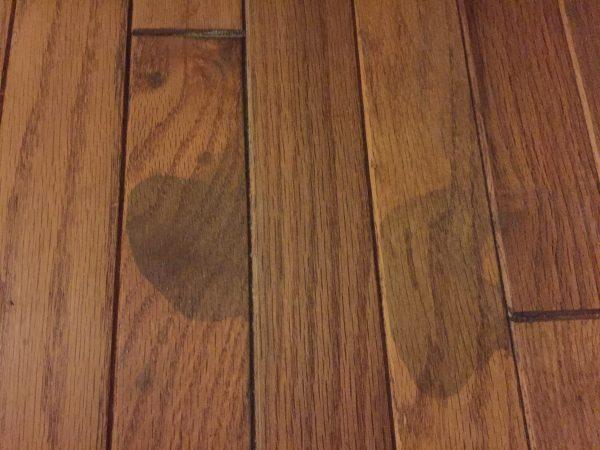 いぬのオシッコで床が汚れる臭う