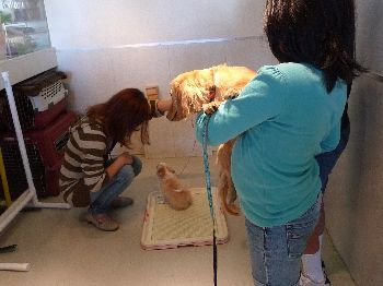 犬のしつけ教室でトイレトレーニング
