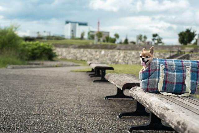 犬のしつけキャリーバッグに慣れさせる